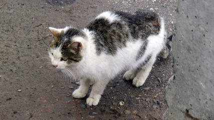 Photo of a cat