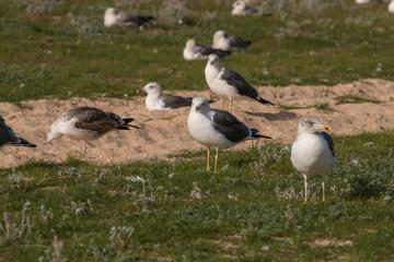 Seagulls in the seashore