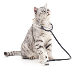 Cat with phonendoscope.