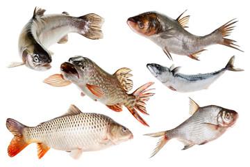 Set fishes. Isolated on white.