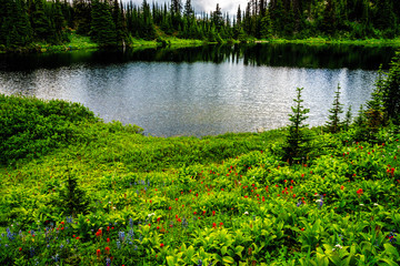 Tod Lake surrounded by Wildflowers near the top of Tod Mountain in the Shuswap Highlands of British Columbia