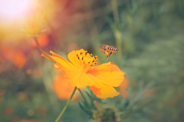 Bee with sun