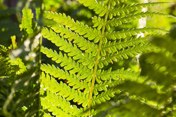 green fern close up