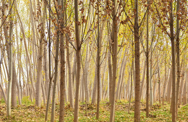 Ormanın Üzerine  Çöken Sonbahar Ve Sessizlik