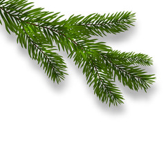 Green lush branch spruce and realistic shadows. Isolated white background. illustration