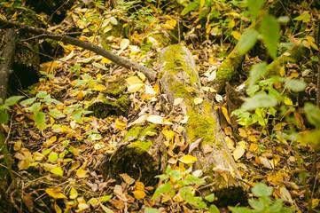 yellow autumn leaves on the ground autumn paints