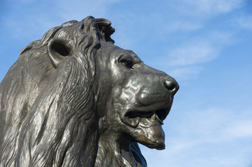 Handsome profile portrait of one of the beloved bronze lions in Trafalgar Square, London, England, installed in 1868