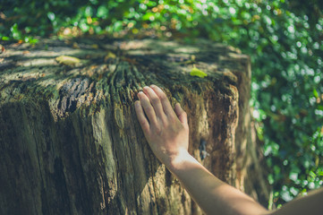 Female hand touching tree stump