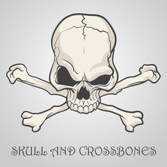 Skull and crossbones on a gray background. Vector illustration