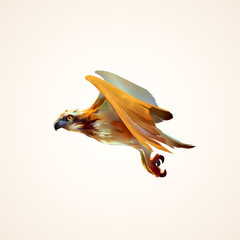 drawing flying hawk isolated