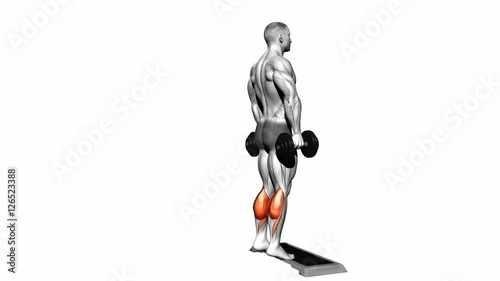 Dumbbell Standing Calf Raise Target Muscles Are Marked In Red