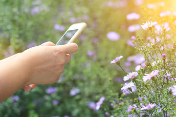 women take photos of beautiful purple flower with Soft focus effect