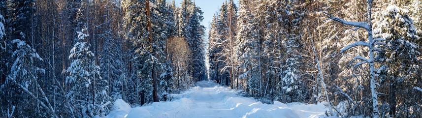 зимняя панорама заснеженного леса, Россия, Урал