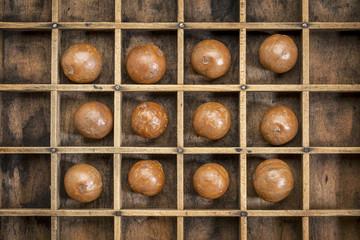 macadamia nuts abstract