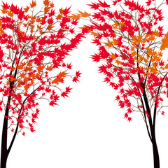 Card with autumn maple tree. Red maples. Japanese red maple.
