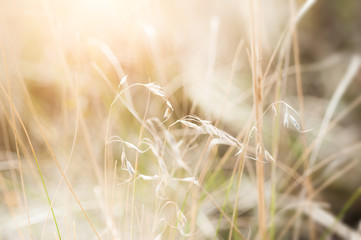 Wild grasses in a field