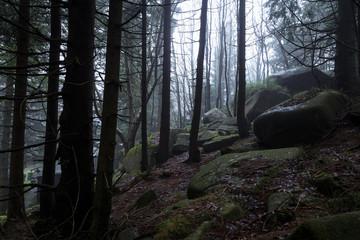 Dunkle Wälder mit großen Steinen