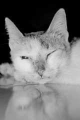 a cat who was sleeping with a black and white display