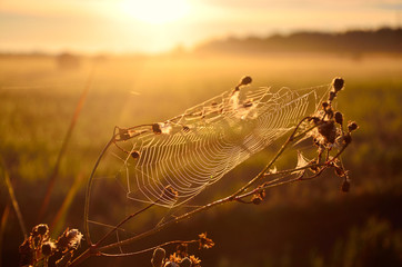 Spider web covered in morning drops. Nice wallpaper from summer morning