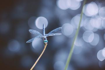 Dragonfly sitting on a plant stem bokeh
