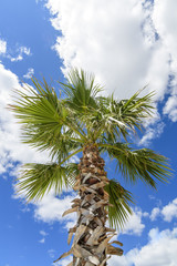 Palm tree against blue sky with white clouds with sunstars and lens flare for artistic effect
