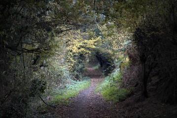 Empty countryside walking track. Baker Path, Tarvin, Cheshire, E