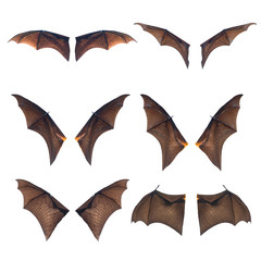 Set of Bat wings isolated on white background