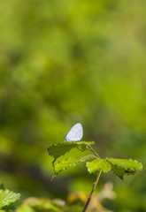 white butterfly resting on top of green plants