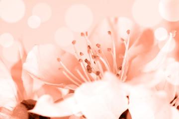 Floral motif wallpaper, Beautiful spring flowers blossom.