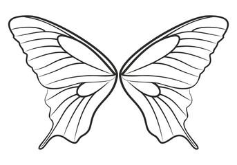 Набросок крыльев  бабочки
