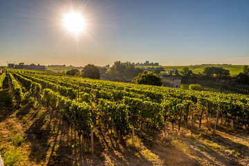 Morning view at wineyards of Saint Emilion - France