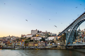 Old Porto cityscape skyline with Dom Luis I Bridge and flying seagulls above the Douro River in sunset time in Porto, Portugal