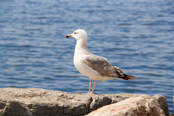 Alone Seagul