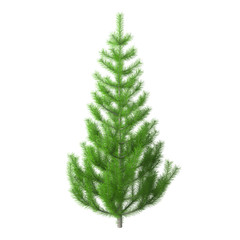 Young pine tree with bright green needles, isolated on white background with clipping path included. Christmas tree without ornaments. 3D rendering.