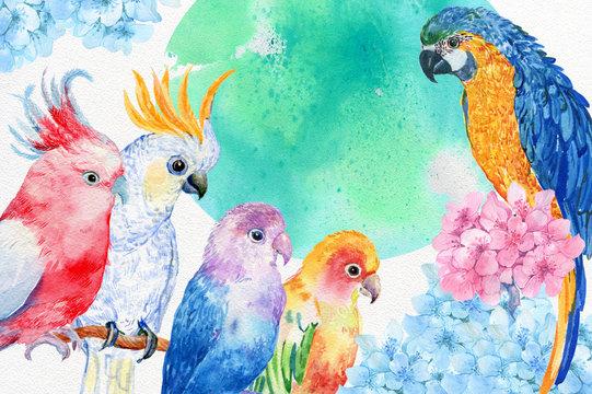 попугай акварель
