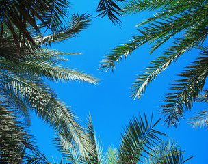 beautiful palm branches against the blue sky