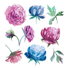 different watercolor peonies romantic collection