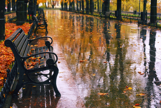 Wonderful autumnal view of the city boulevard, avenue. Alley with benches, the rain, the golden leaves of autumn trees are reflected in the puddles, deserted.