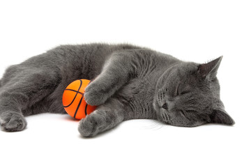 gray cat with a ball sleeping on a white background