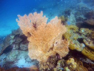 Big yellow coral and small fish swimming around