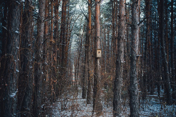 birdhouse in a pine forest