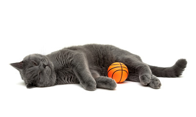 kitten and an orange rubber ball on a white background