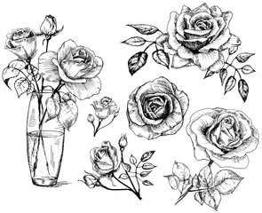 set Roses, collection hand drawn rose, vector