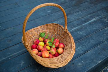Apples in wicker basket at dark plank floor with sprig of mint