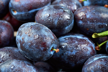 Pile of fresh plums. Fruit background