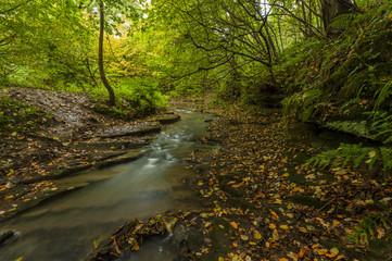 Woodland with river. Northumberland. England. UK.