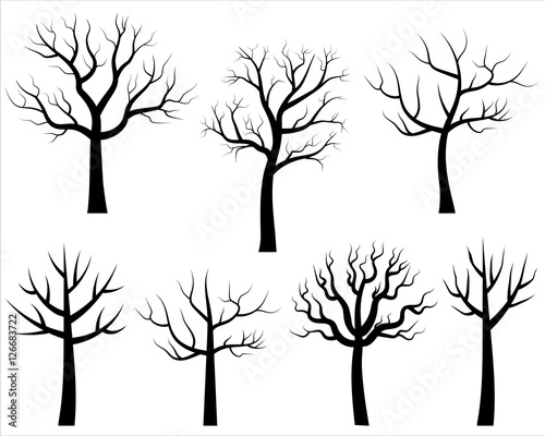 Black Walnut Trees Without Leaves 51