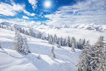 Fototapete - Trees and mountains covered by fresh snow in Kitzbühel ski resort, Tyrolian Alps, Austria