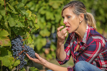 wine grower analysing grapes Fototapete