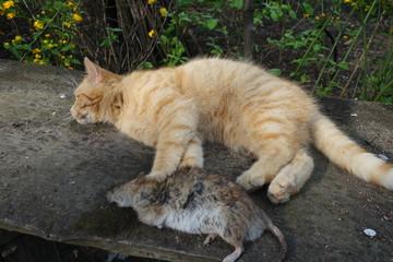 The cat caught the rat